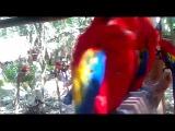 Шкарет парк попугаи  (Майя парк) Мексика